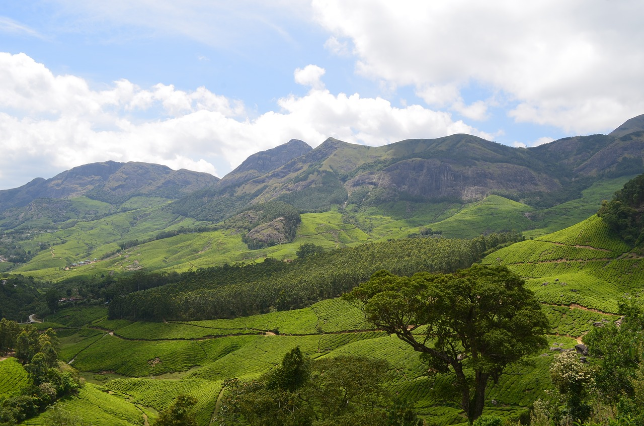 Munnar: A tour of gorgeous plantations