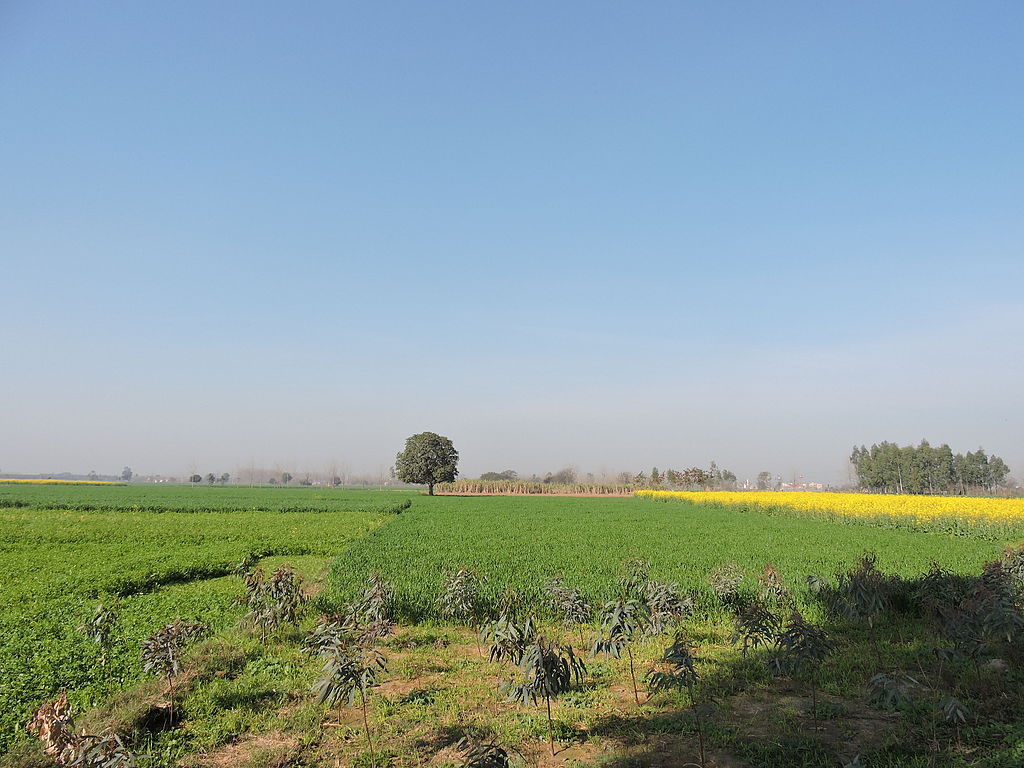 A Vacation at a Farm Stay in Punjab