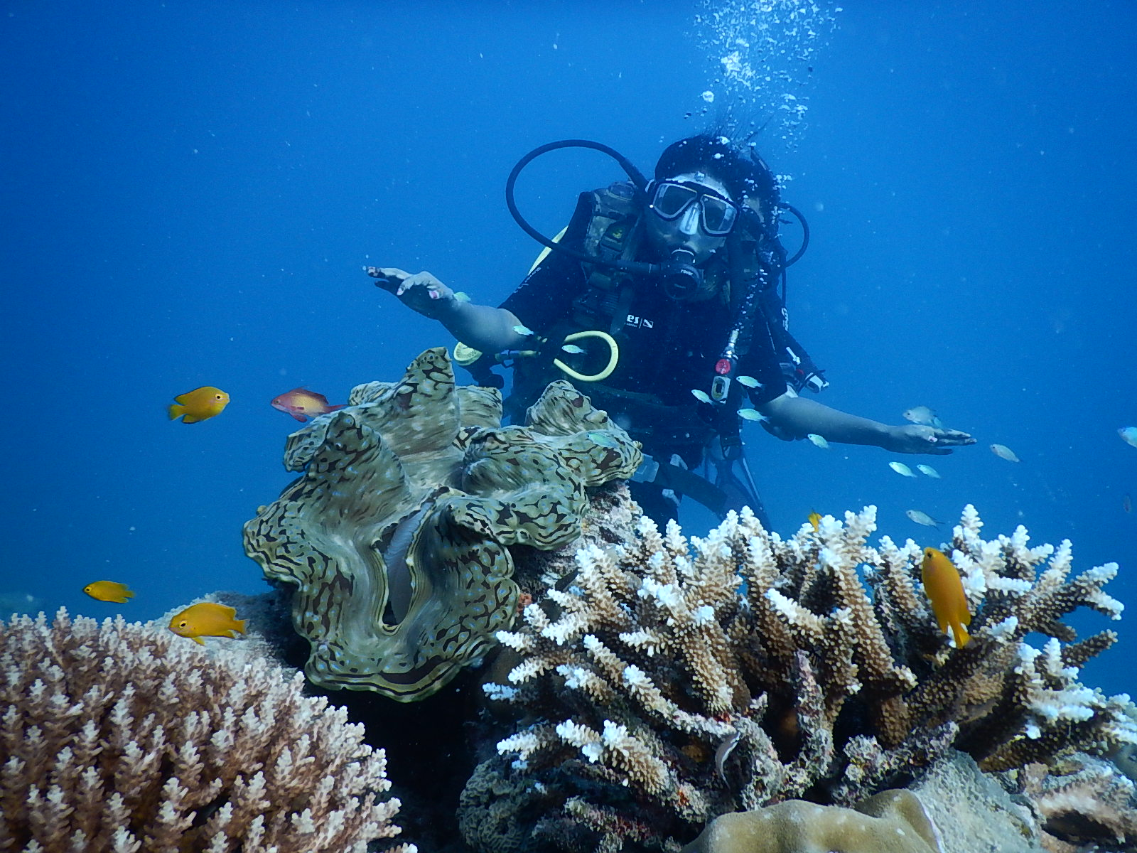 savaari-scuba-diving-goa-inida-adventure-tourism