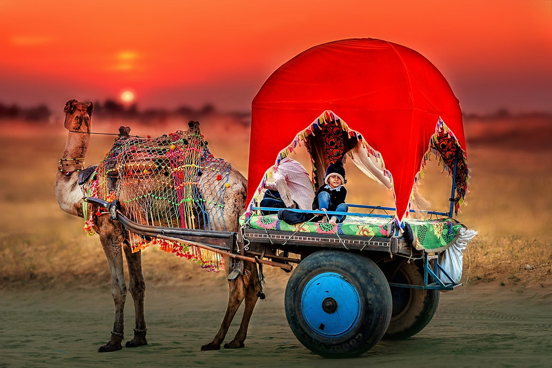 savaari-pushkar-mela-biggest-camel-fair