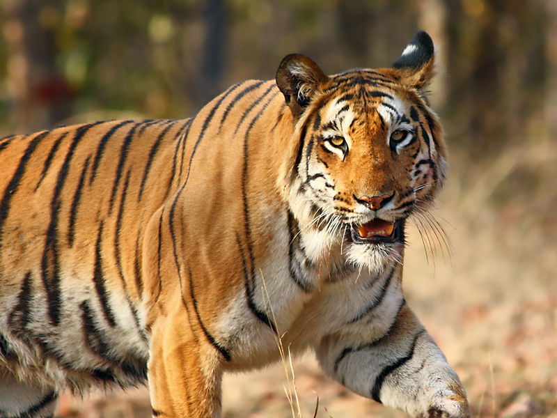savaari-pench-national-park