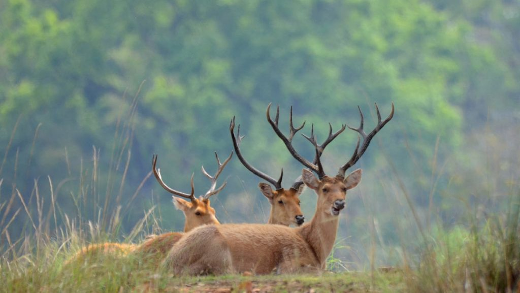savaari-kanha-national-park-tour-india