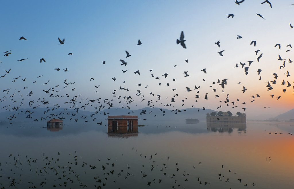 savaari-jal-mahal-at-dawn