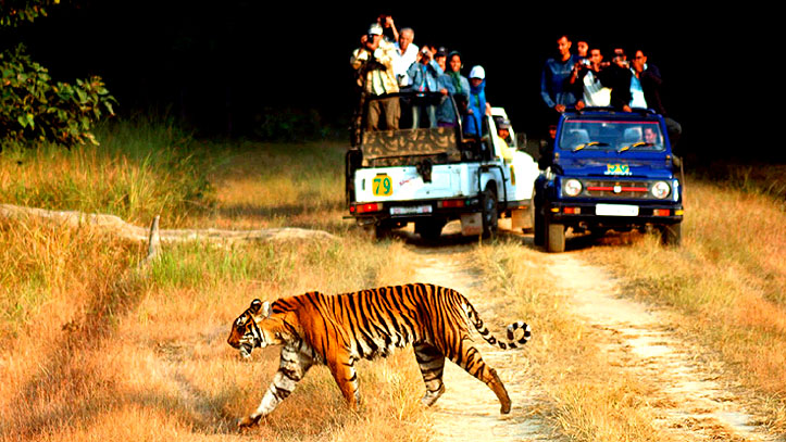 savaari-jim-corbett-national-park--travel-goals