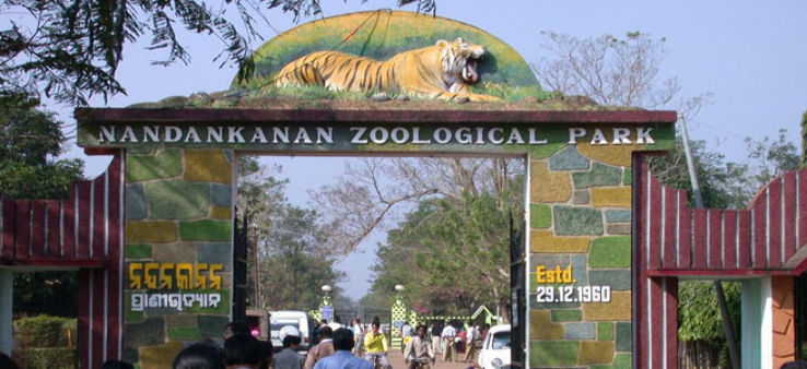 nandankanan-zoological-park-reopens