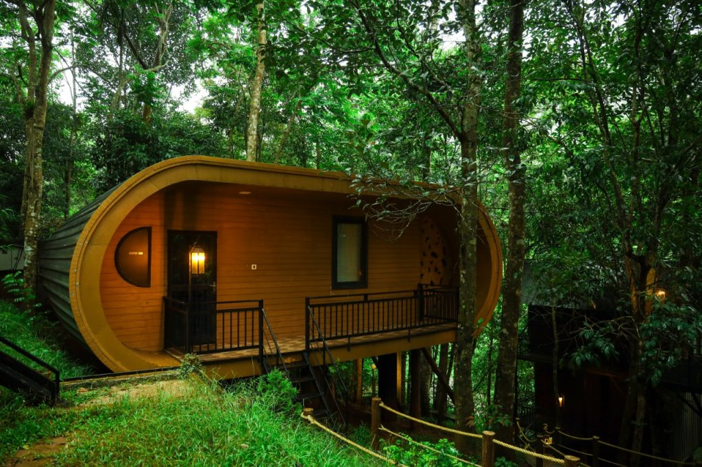 live-in-a-treehouse