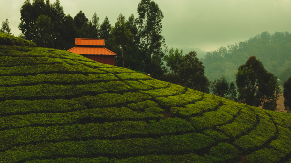 ooty-travel-guide-everything-you-need-to-know