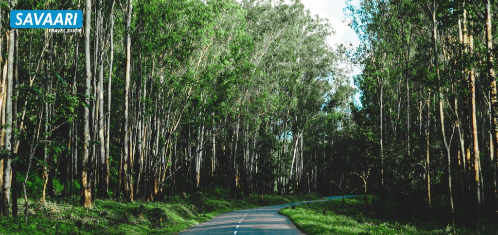Wayanad - A Complete Travel Guide